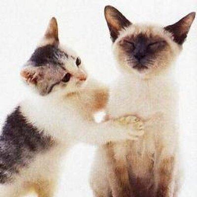 cat giving animal Reiki