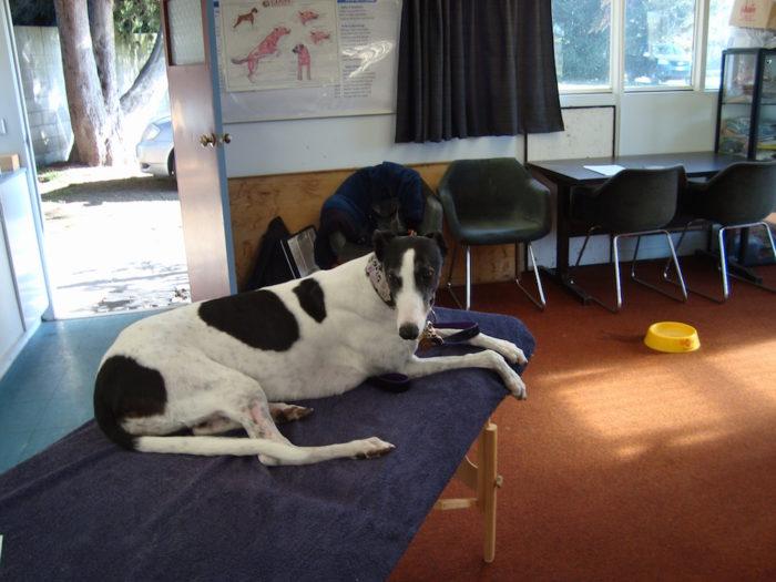 dog on Reiki table